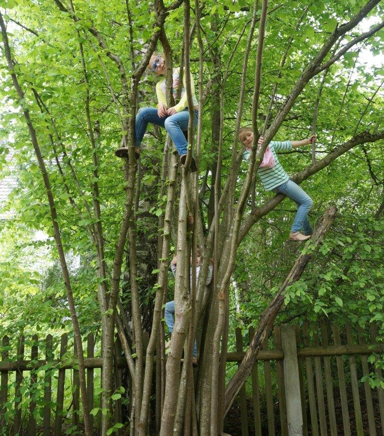 Niñas en un árbol